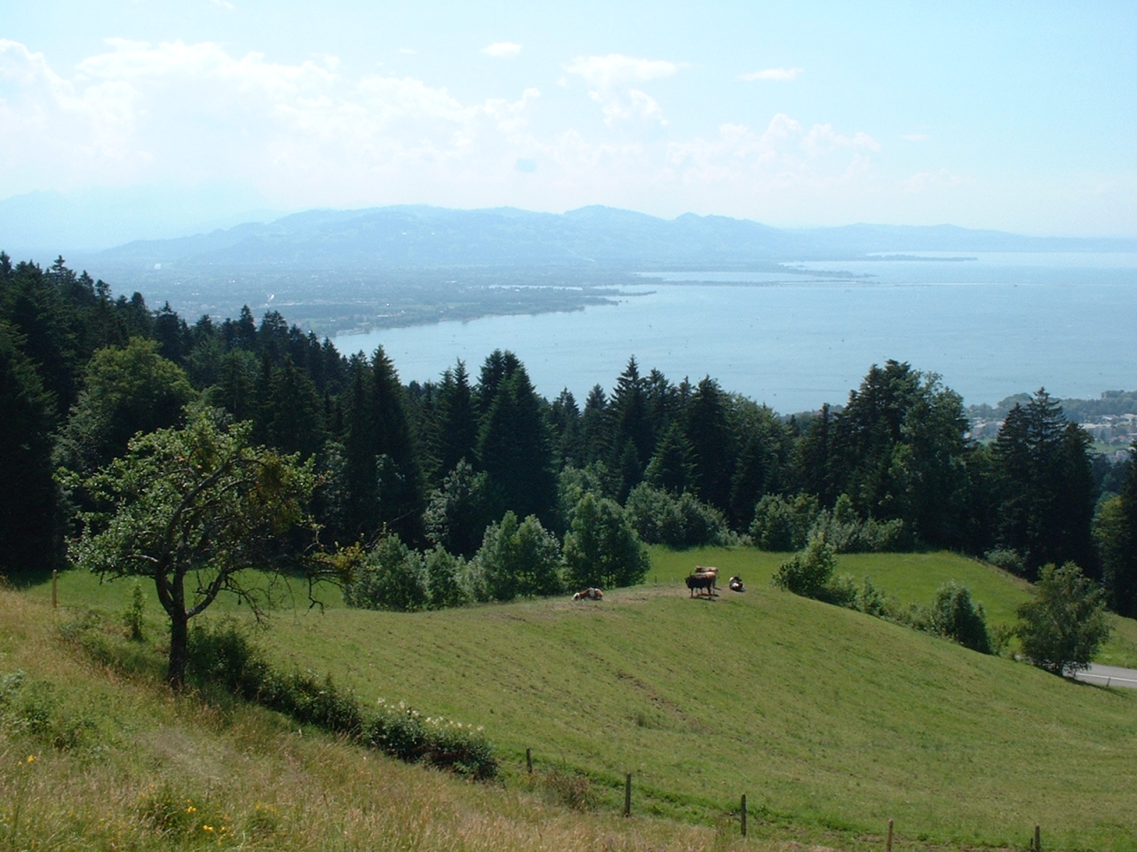 Bodensee_04_15